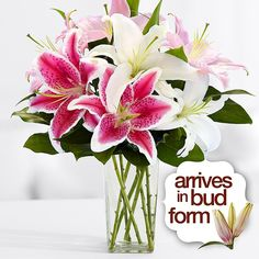 proflowers discount code december 2014
