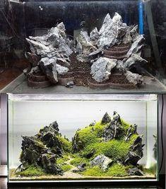 201 Besten Aquarium Bilder Auf Pinterest In 2019 Fish Tanks
