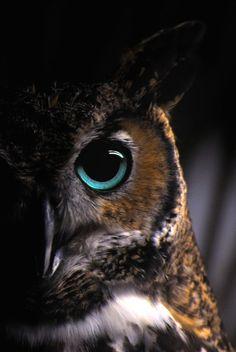 Hätten die Lenker der Welt annähernd die Weisheit, welche man mythologisch der Eule zuschreibt, sähe die Welt anders aus. Lust auf eine bessere Welt? www.dberona.com