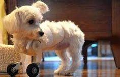 Siga em frente!: Cachorrinho Manco