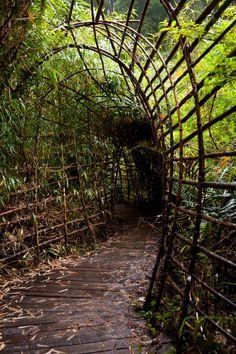 Sendero selva Valdiviana.