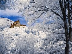 Snowy Landscapes