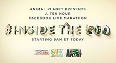Today is very exciting!  The 10-hour live marathon starts now. Go live inside accredited conservation zoos and aquariums all day with @animalplanet (visit the Animal Planet or Woodland Park Zoo Facebook page to watch live.) Woodland Park Zoo is coming up!  #live #zoolife #zoo #zookeeper #woodlandparkzoo #animalplanet #animallovers #aza  #animals