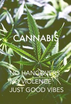 dopeyourlife:☮check out this page for more good vibes→follow← ☮❤✌ Medical Marijuana☮❤✌ @ ★☆Danielle ✶ Beasy☆★