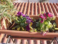 Natassa's blog tips: Λουλούδια για το Καλοκαίρι Blog Tips, Plants, Plant, Planets