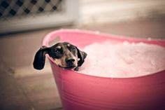 Everything is better with Dog's hair.: Homemade Dog Shampoo  See the simple Oatmeal Shampoo and the Egg Conditioner