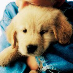 10 trucs infaillibles pour dresser votre #chien   http://selection.readersdigest.ca/animaux/sante/10-trucs-infaillibles-pour-dresser-votre-chien