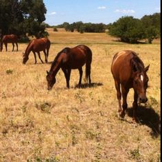 It's a band of horses. Literally.