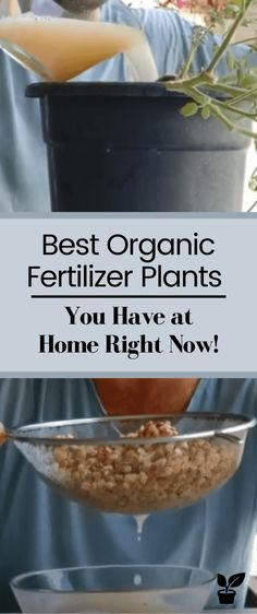 Best Organic Fertilizer Plants - You Have at Home Right Now! After this Tip, any plant you want to grow will have a big success. Organic Fertilizer For Vegetables, Homemade Plant Fertilizer, Home Made Fertilizer, Succulent Fertilizer, Fertilizer For Plants, Organic Plants, Vegetable Gardening, Gardening Tips, Marijuana Plants