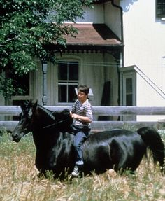 """'The Black Stallion' (1979) """"The Black"""" was played in the movie by Cass Ole, a beautiful and very intelligent Texan-bred Arabian stallion. Cass Ole was also a show horse, winner of numerous prizes and trophies. He really was a black stallion, but he did have four white socks and a white star on his forehead, all of which were dyed black for the film."""