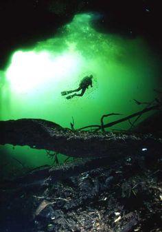 Scuba diving in Gran Cenote Cavern Cave Riviera Maya Tulum Playa del carmen