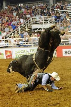 Professional Bull Riding Pictures - Bing Images- going to ...
