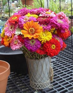 Beautiful Zinnia Wedding Bouquet 2014 Beautiful Zinnia Wedding Bouquets Colorful Zinnia Flower Bouquets Cool Zinnia Flowers B. Zinnia Garden, Cut Flower Garden, Flower Farm, Cut Garden, Fresh Flowers, Beautiful Flowers, Zinnia Bouquet, Flower Bouquets, Back To Nature
