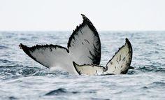 Voir des baleines et des dauphins en France