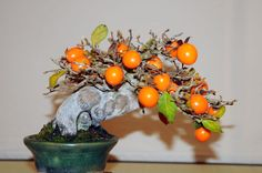 I really want a Fruity Bonsai!!!