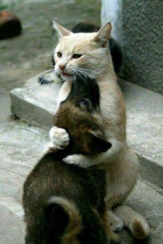 Cani e gatti...