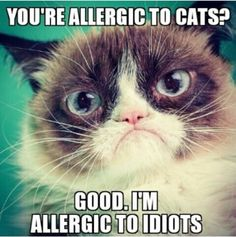 You're allergic to cats? Good, I'm allergic to idiots: Xd Grumpycat, Grumpy Cat Memes, Cats Humor, Allergy Grumpycat, Cat Grumpycat, Even Grumpycat, Animals Don T, Baby Cats