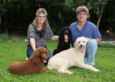 Beyond Bliss Poodles | NY Standard Poodles, Red and Black, Selectively Bred