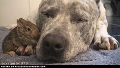 Pit Bull And Friends | Video • APlaceToLoveDogs.com • dog dogs puppy puppies cute doggy doggies adorable funny fun silly photography