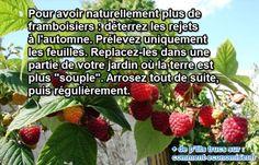 Vous voulez avoir plus de framboisiers naturellement, dans votre jardin ? Et si je vous dévoilais une astuce toute simple qui ne coûte rien de plus qu'un peu d'huile de coude ?  Découvrez l'astuce ici : http://www.comment-economiser.fr/plus-framboisiers-naturellement.html?utm_content=buffer937a4&utm_medium=social&utm_source=pinterest.com&utm_campaign=buffer