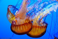 Download wallpaper jellyfish,  Jellyfish,  Underwater World,  water free desktop wallpaper in the resolution 4928x3264 — picture №658603