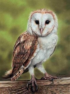 How to Draw A Barn Owl Using Pastel Pencils