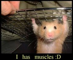 i has muscles!
