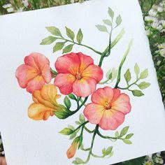 Watercolour Drawings, Watercolor Girl, Botanical Drawings, Botanical Art, Watercolor Flowers, Watercolor Paintings, Art Drawings, Simple Flower Design, Color Pencil Art