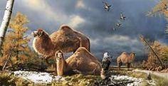Descubren restos fósiles de un camello que vivió en el Ártico superior