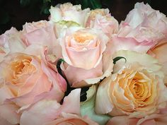 Salma Roses: l Light Pink Flowers, Peach Flowers, Pretty Flowers, Colorful Flowers, Wholesale Florist, Beautiful Roses, Simply Beautiful, Peach Orange, Blossom Flower