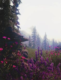 I think this is Skyrim but hey, works anyway.