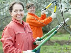 """""""Why winter is the best time to prune your fruit trees and shrubs"""" by GreenUP // Complete an online course on fruit tree care and get a free fruit tree from Ecology Park this spring."""