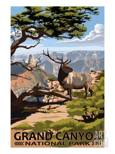 Grand Canyon National Park - Elk & Point Imperial Print at Art.com