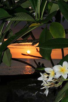 Sunset with plumeria flowers Beautiful Islands, Beautiful Sunset, Beautiful Places, Beautiful Pictures, Amazing Sunsets, Sunsets Hawaii, Aloha Hawaii, Hawaii Tours, Hawaiian Sunset
