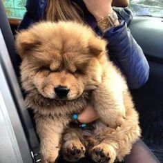 linda m dogs love animals pets Cute Dogs And Puppies, Baby Dogs, I Love Dogs, Doggies, Fluffy Animals, Cute Baby Animals, Animals And Pets, Cute Creatures, Animals Beautiful