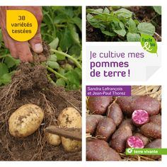 Je cultive mes pommes de terre, 38 variétés testées avec résultats : rendement, goût, résistance aux maladies...