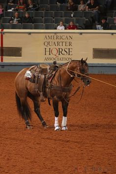 gorgeous..love working horses quarter horses