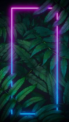 Neon Nature iPhone Wallpaper - iPhone Wallpapers