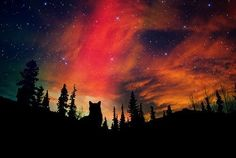Northern Lights! <3