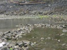 Fish fence of stone on Lasqueti Island