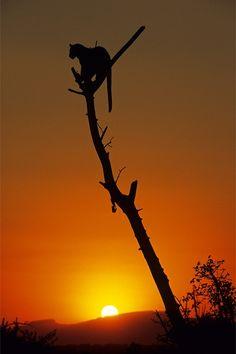 *In the setting sun