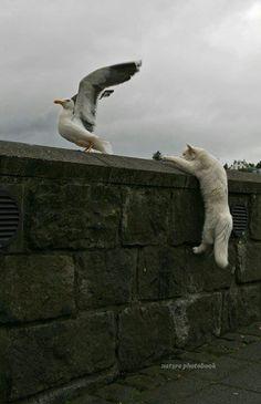 Cat misses the catch