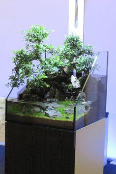 Paludarium that combines elements of aquascaping, terrarium craft, and bonsai. Aquarium Terrarium, Nature Aquarium, Terrarium Diy, Planted Aquarium, Turtle Terrarium, Aquascaping, Vivarium, Indoor Water Garden, Indoor Plants