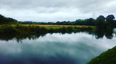 Grey but beautiful! Lovely walk along the Riverwey & the Riverside Nature Reserve today.