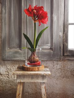 SIA Home Fashion - SIA Home Fashion - Nueva colección Otoño/Invierno 2012 Indian Eyes, Spring Flowers, Flower Arrangements, Glass Vase, Merry Christmas, Indoor, House Design, House Styles, Plants