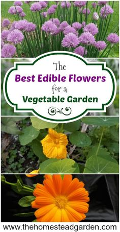 The Best Edible Flowers for a Vegetable Garden