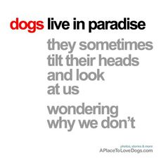 dogs live in paradise, they sometimes tilt their heads and look at us wondering why we don't.