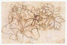 Study of Two Plants, Canvas by Leonardo Da Vinci