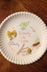 Second Grade Life Science Activities: Butterfly Life Cycle