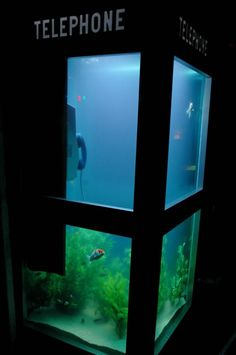 Telephone booth fish tank